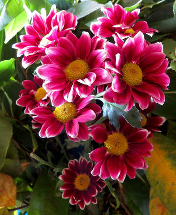 Mazzo di fiori №26599