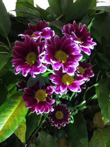 Schönen Blumenstrauß №26598