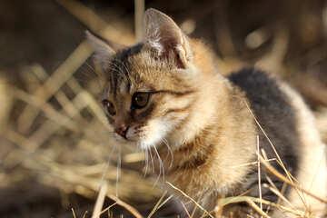 Cat №26067