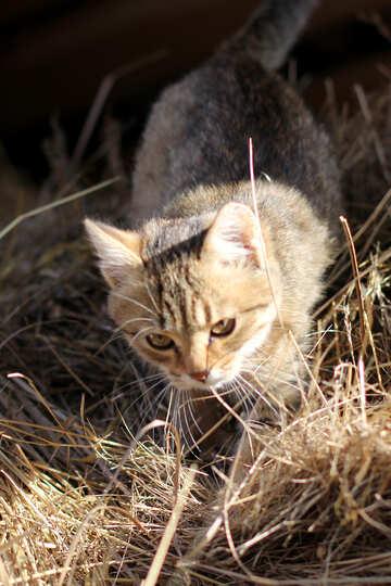 Cat attack №26074