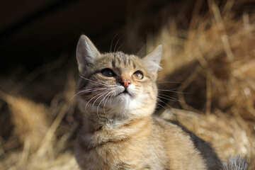 Attentive Cat №26075