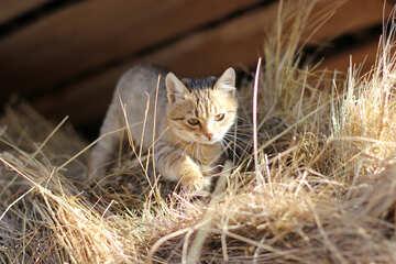 Cat in the attic №26070