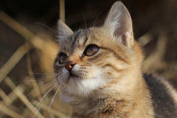 Cat portrait №26066