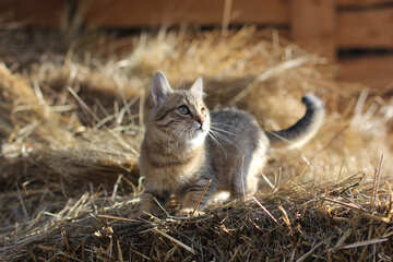 Rural cat №26076