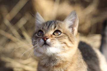 View cat №26063
