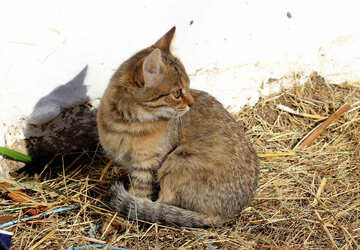 Kitten on hay №26078