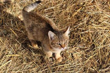 Little cat №26077