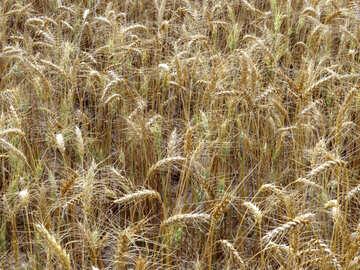 Agribusiness №26828