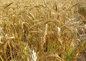 Harvest №26845
