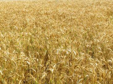 Rich harvest №26824