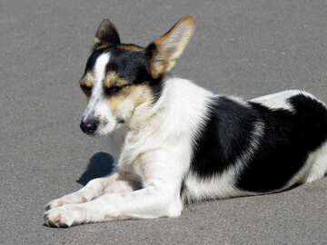 Breed Dog №26893