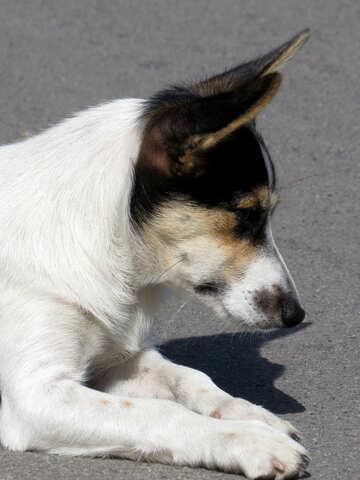 Dog hunter №26896