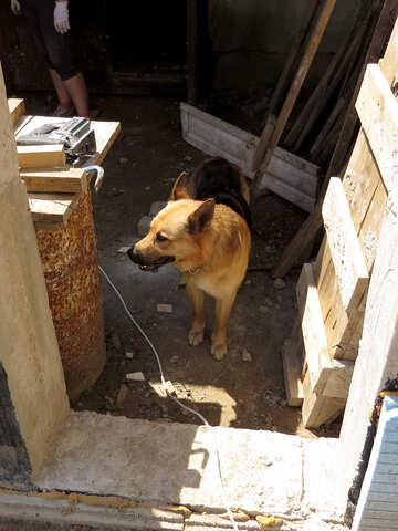 Hund auf Baustelle №26885