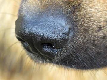 Dog`s nose №26878