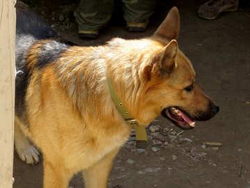 Watchdog №26886