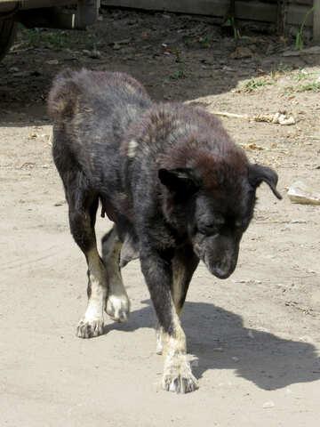 Kranker Hund №26888