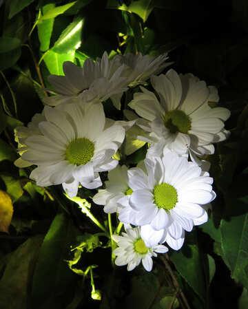 Beautiful white flowers №26589