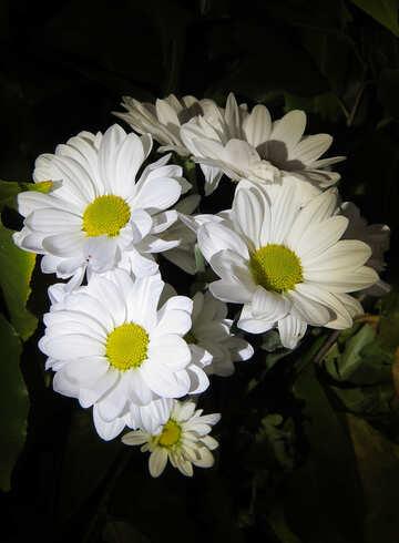 Leuchtend weiße Blüten №26593