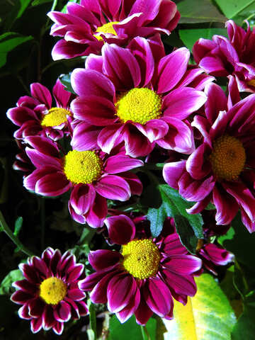 Bunte Blumen №26595
