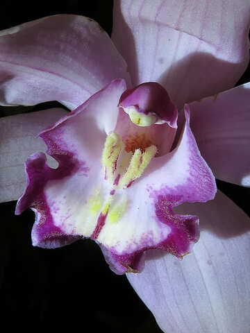 Orchid close-up №26607