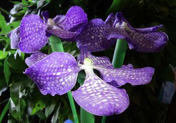 Orchid bouquet №26625