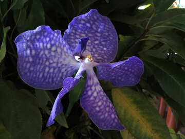 Orchid flower №26615