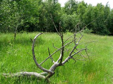 Dry tree №26647