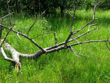 Old fallen tree №26670