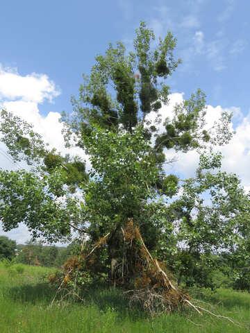Whimsical tree №26656