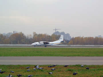 Birds on the runway №26542