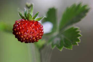 Useful strawberries №26008