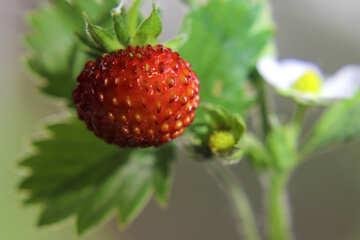 Wallpapers for desktop strawberries №26010