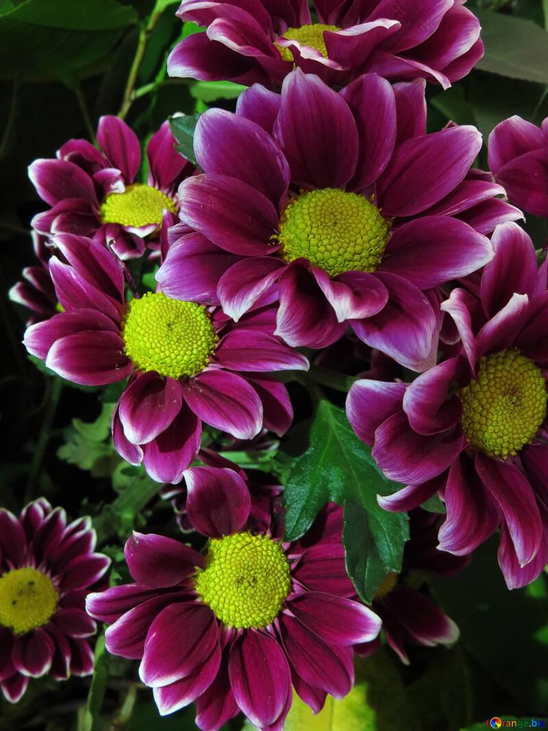 Flores brillantes antecedentes №26596