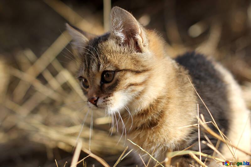 Katze №26067
