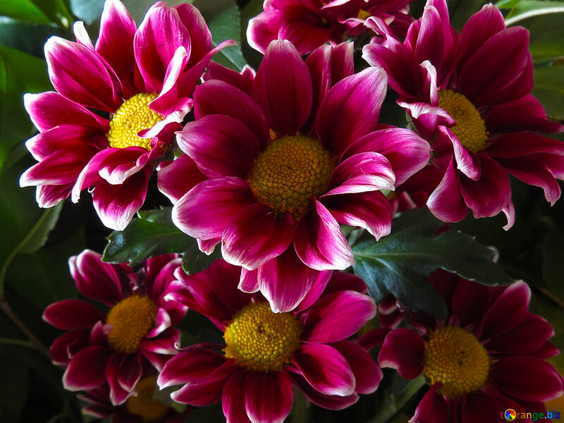 Beautiful flowers on the desktop №26602