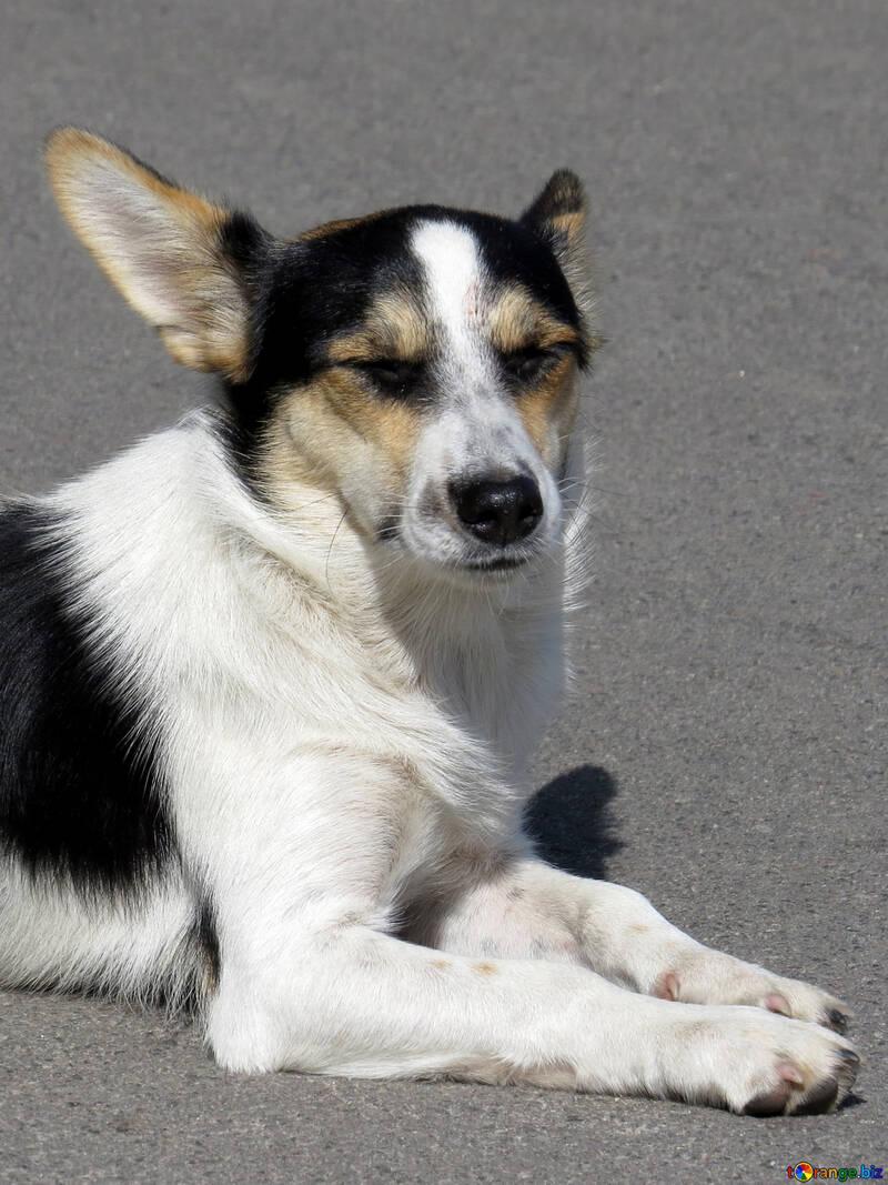 Dog №26891