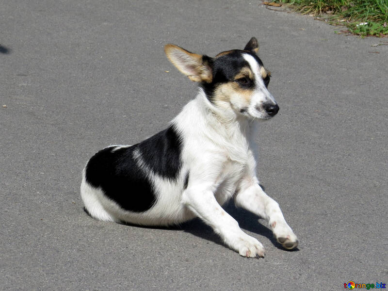 Street dog №26897