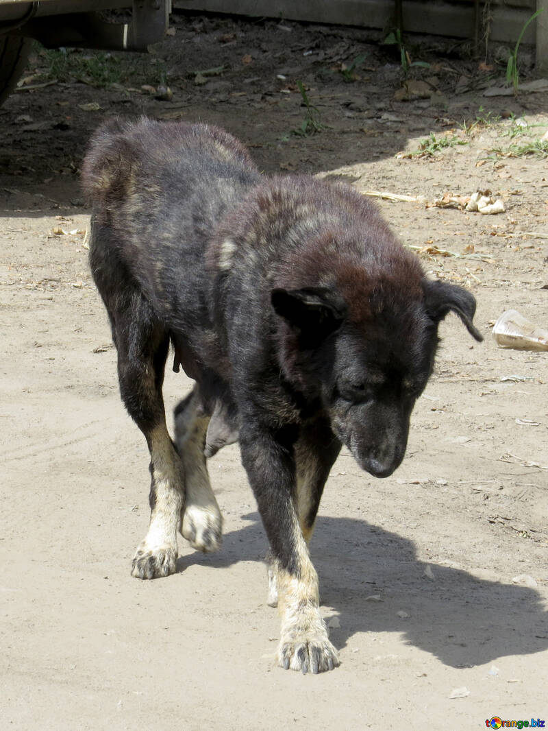 Sick dog №26888