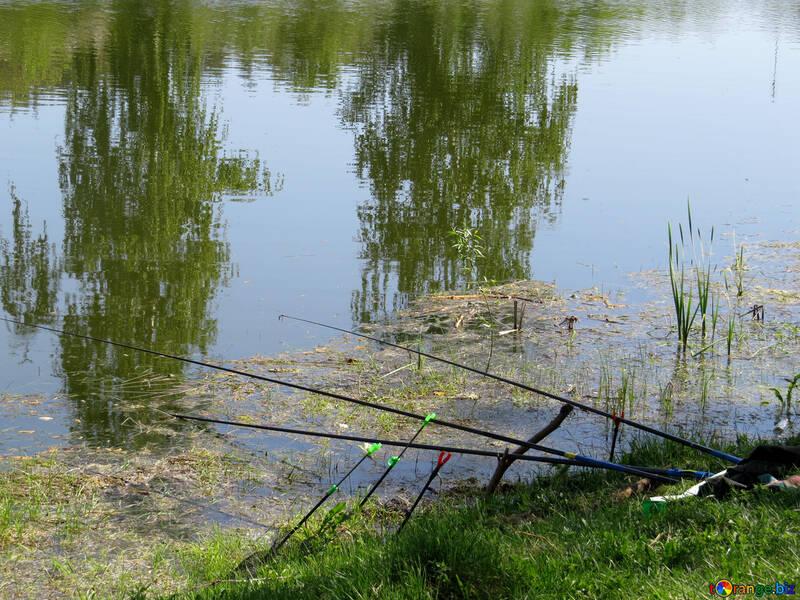 Fishing №26560