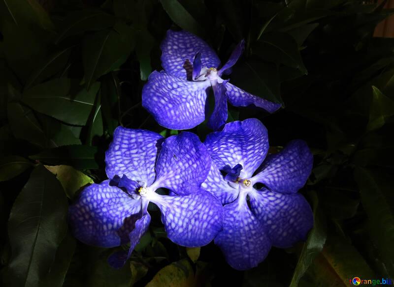 Bouquet of orchids №26617