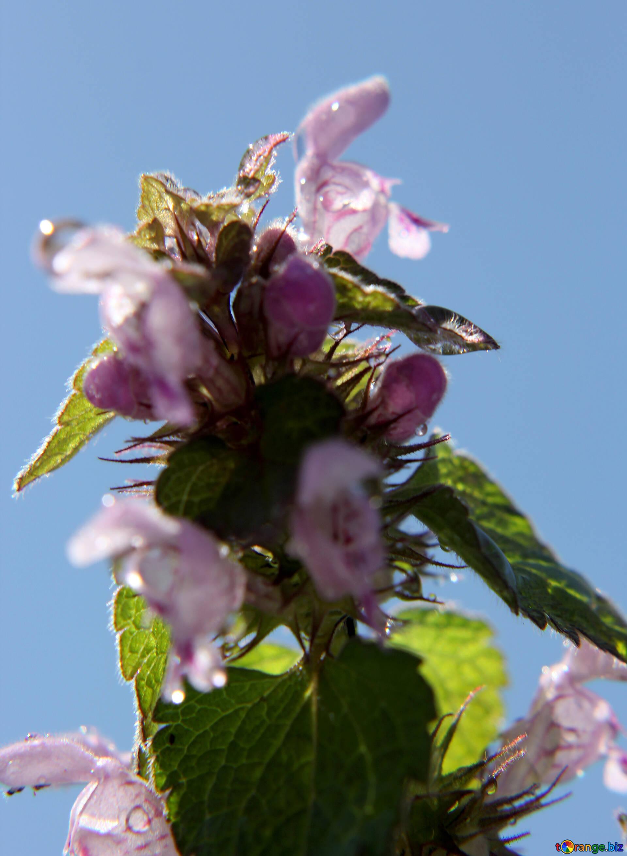 Piccolo Fiore Piccolo Fiore Su Sfondo Blu Macro 27126