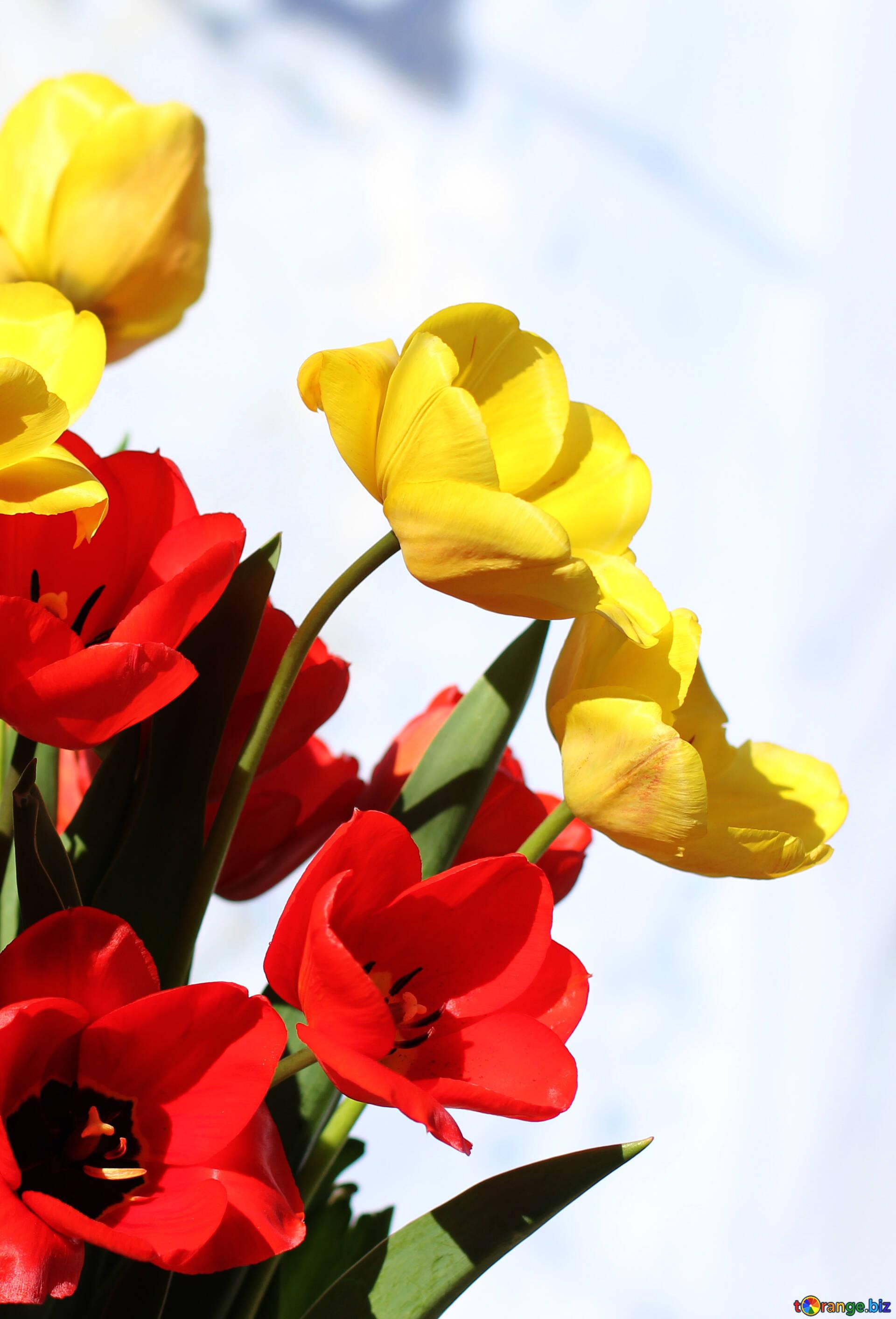 37 frühlingsblumen bilder kostenlos  besten bilder von