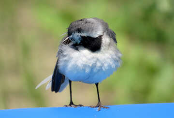 Bird preens feathers №27407