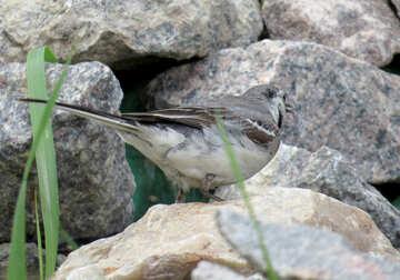 Bird on rocks №27399