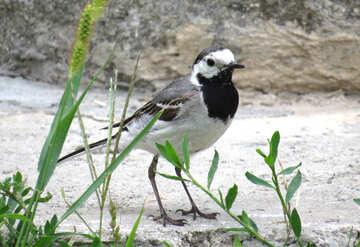 Bird №27396