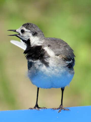 Bird Blue Green Backgorund №27410