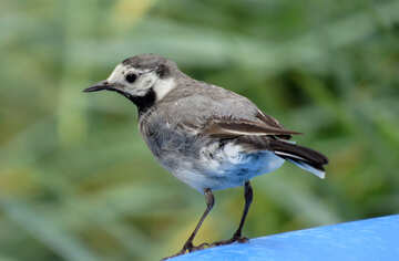 Birdie №27403