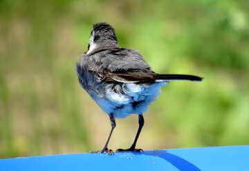 Bird`s tail №27406