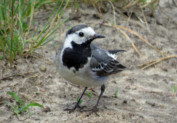 Bird looking for food №27404