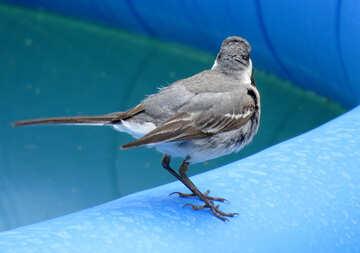 Bird looking for water №27393